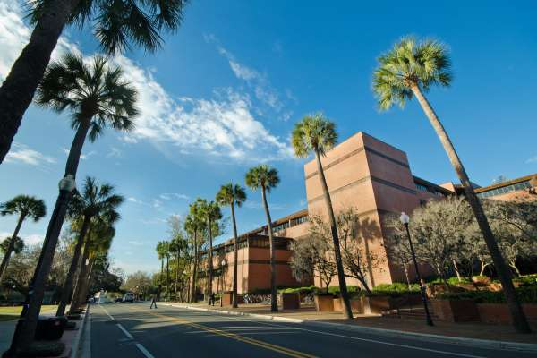 Road and palm trees in front of Marston Science Library
